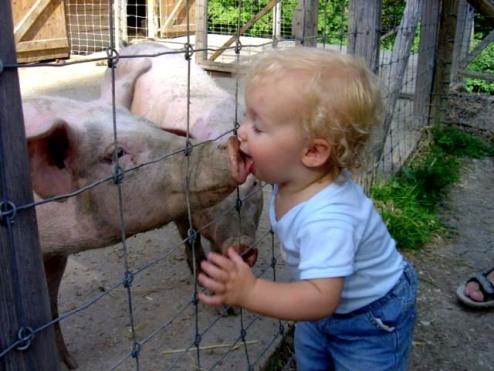 swineflu